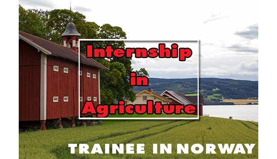 Trainee in Norway